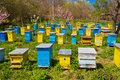 Beehives blue and yellow in garden Royalty Free Stock Photography