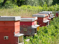 Beehives in field rural industry for honey production apiculture Stock Photos