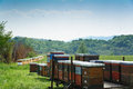 Beehives mounted on trailer standing in a field of grass. Royalty Free Stock Photo