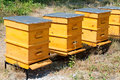 Beehives some yellow in garden Royalty Free Stock Photo