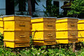 Beehives some yellow in garden Royalty Free Stock Photography