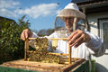 Beekeeper caring for bee colony Royalty Free Stock Photo