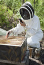 Beekeeper with cell phone Royalty Free Stock Image