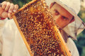 Beekeeper collecting honey selective focus on a honeycomb and bees Royalty Free Stock Image