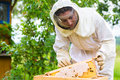 Beekeeper controlling beeyard and bees female beehive comb frame Stock Photo