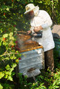 Beekeeper has control over a framework with honey Royalty Free Stock Photo