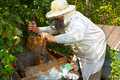 Beekeeper has control over a framework with honey Stock Photos
