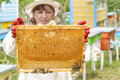 Beekeeper holding frame of honeycomb with bees Royalty Free Stock Photo