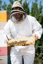 Beekeeper inspecting honeycomb frame at apiary male in protective clothing Stock Images
