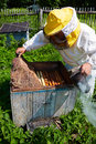 Beekeeper opens a beehive on an apiary Royalty Free Stock Image