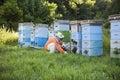 Beekeeper Tending Beehives Royalty Free Stock Photo
