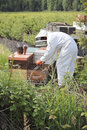 Beekeeper at work a is busy removing honey from the frames or plates on a beehive box Royalty Free Stock Photography