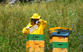 Beekeeper at work during the honey extraction Royalty Free Stock Images
