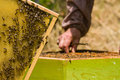 Beekeeper working on honeycomb with bees and honey around the beehive Royalty Free Stock Photos