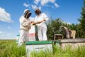 Beekeepers examining honeycomb at apiary in protective workwear together Royalty Free Stock Images