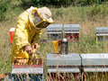 Beekeeping bee keeping apiculture real work not mockup beekeeper checking his beehives Stock Photography