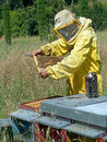 Beekeeping checking the hive rural industry real work in progress Stock Photography