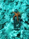 Beer bottle on the bottom of the sea Royalty Free Stock Image