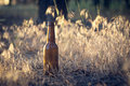 Beer bottle on the ground Royalty Free Stock Photo