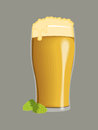 Beer in a glass amber colored with foam and two green hops isolated against gray background Stock Images