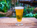 Beer glass on wood background Royalty Free Stock Photo
