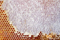 Beer honey in honeycombs. Stock Photos