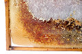 Beer honeycombs on a wooden framework close up Stock Photography