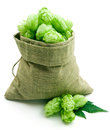 Beer hops Stock Image
