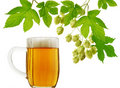 Beer mug and fresh hops Royalty Free Stock Photography