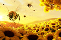 Bees in action collecting honey from flowers Royalty Free Stock Photos