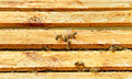 Bees in beehive. Royalty Free Stock Photography