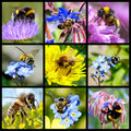Bees and bumblebees mosaic Royalty Free Stock Image