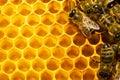 Včely na plástev medu