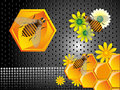 Bees and honeycomb cells Stock Images