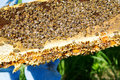 Bees on honeycomb tray gathered Royalty Free Stock Photos