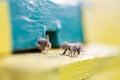 Bees near the hive closeup Royalty Free Stock Photos