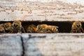 Bees nectar macro the for Stock Photo