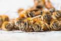The bees for nectar swarm Stock Photography