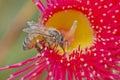 Bees suck honey Royalty Free Stock Photo