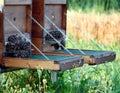 Bees swarm Stock Image