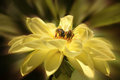 Bees two collect pollen from a flower Royalty Free Stock Photos