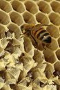 Bees which come from the harsh winter ncoming out of in their hives ncelebration to build cells for their honey so perfectly Stock Photo