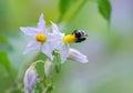 Bees on wildflowers in monroe georgia Stock Image