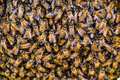 Bees working on honeycomb nsects and harmony in the workplace Royalty Free Stock Images