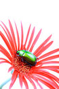 Beetle and flower Royalty Free Stock Photography
