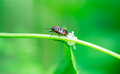 Beetle on grass macro photography Royalty Free Stock Photography