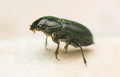 Beetle natural world seen from up close Royalty Free Stock Images