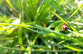 Beetle red whiskered blurred background of green grass