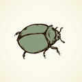 Beetle. Vector drawing