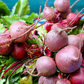 Beetroot assortment Stock Images